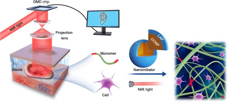 image of in vivo 3D bioprinting